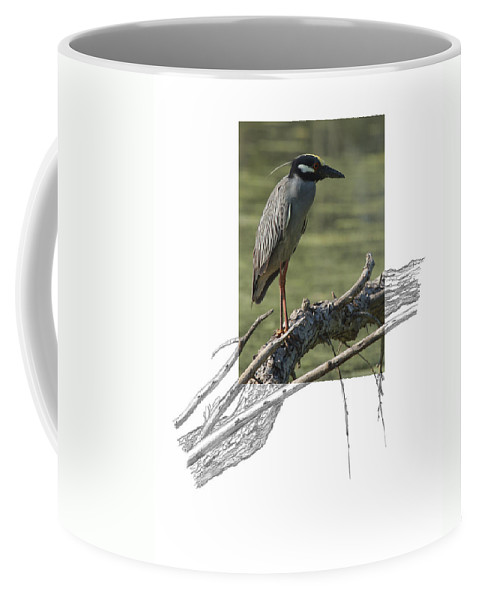 Yellow-crowned Night-heron Coffee Mug featuring the photograph Yellow-crowned Night-heron by Andrew McInnes