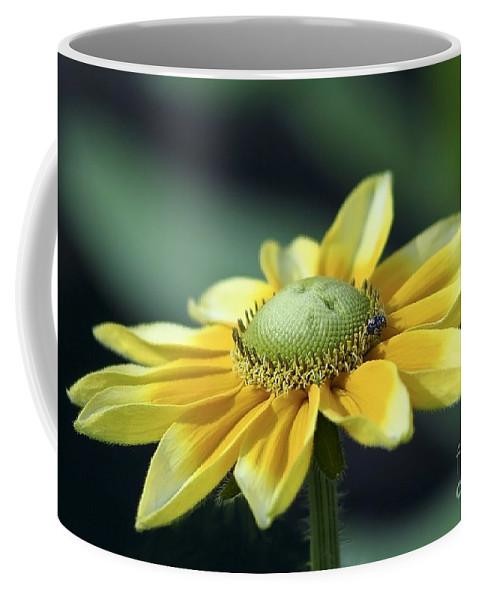 Flower Coffee Mug featuring the photograph Yellow Daisy by Teresa Zieba