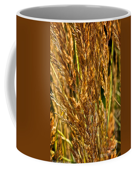 Grass Coffee Mug featuring the photograph Yellow Feather Reed Grass by Susan Herber