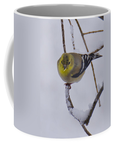 Usa Coffee Mug featuring the photograph Yellow Finch Cold Snow by LeeAnn McLaneGoetz McLaneGoetzStudioLLCcom