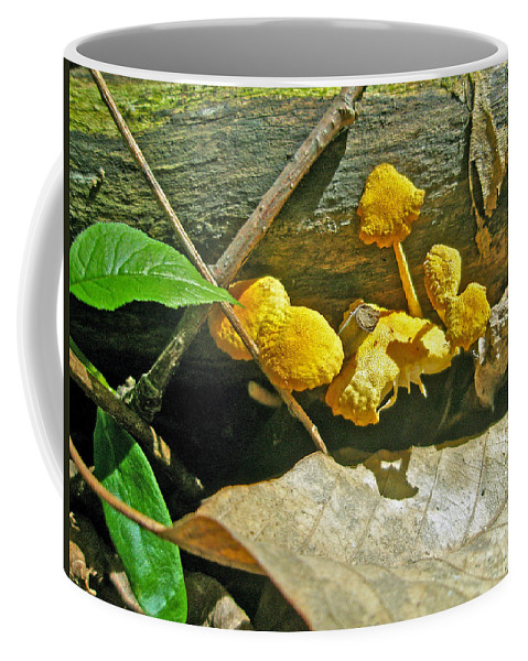 Coffee Mug featuring the photograph Yellow Sandpaper Mushrooms by Mother Nature