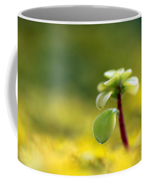 Sedum Coffee Mug featuring the photograph Yellow Sedum by Henrik Lehnerer
