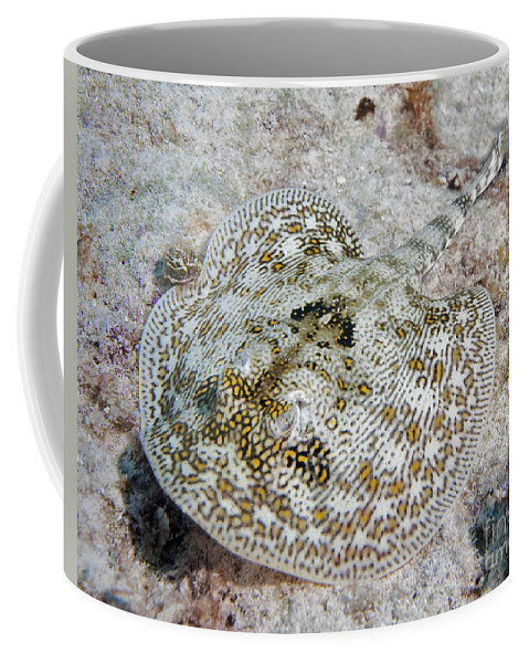 Yellow Stingray Coffee Mug featuring the photograph Yellow Stingray In Caribbean Sea by Karen Doody