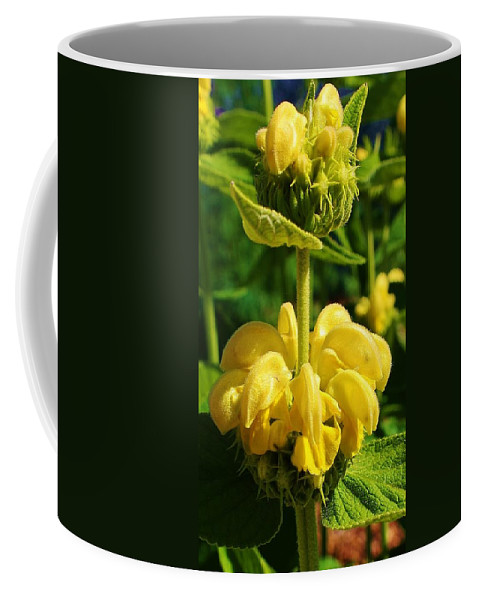 Flora Coffee Mug featuring the photograph Yellow Suprise by Bruce Bley