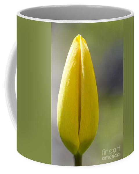 Tulip Coffee Mug featuring the photograph Yellow Tulip Bud by Heiko Koehrer-Wagner