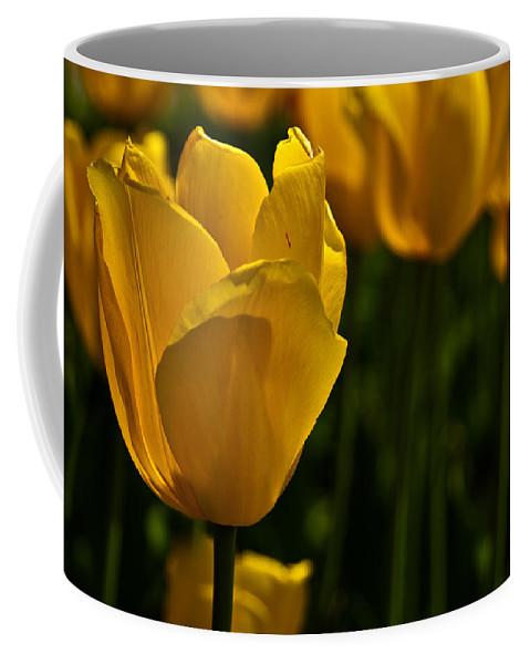 Tulip Coffee Mug featuring the photograph Yellow Tulips by Onyonet Photo Studios