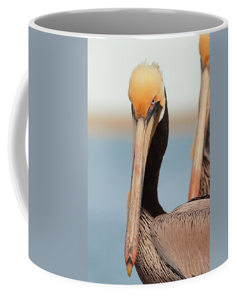 Brown Pelican Coffee Mug featuring the photograph Yes I Am Pretty by Andrew McInnes