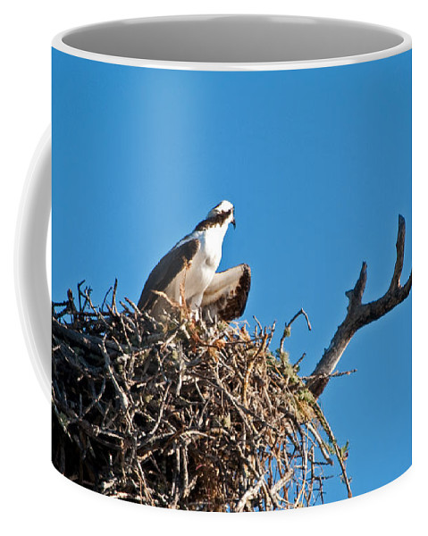 Osprey Coffee Mug featuring the photograph You Lookin At Me by Christine Stonebridge