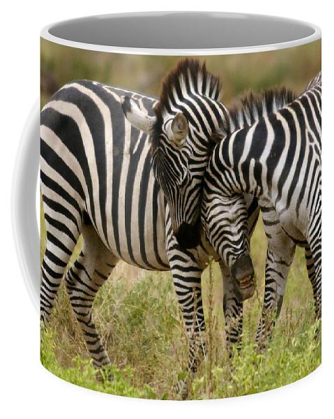 Africa Coffee Mug featuring the photograph Zebra Hug by Jack Daulton