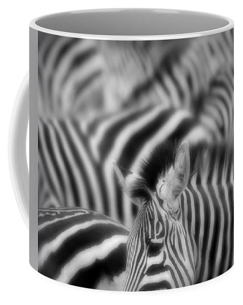 Africa Coffee Mug featuring the photograph Zebra by Jack Daulton