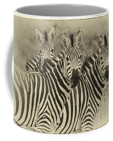 Africa Coffee Mug featuring the photograph Zebra Trio by Jack Daulton