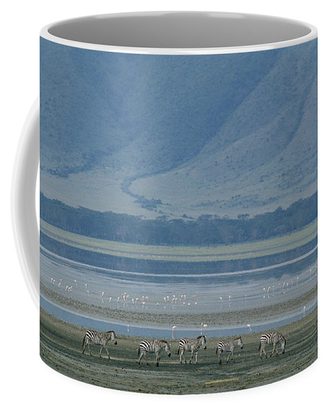 Africa Coffee Mug featuring the photograph Zebras And Pink Flamingos, Ngorongoro by Skip Brown