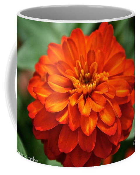 Plant Coffee Mug featuring the photograph Zinnia Flare by Susan Herber