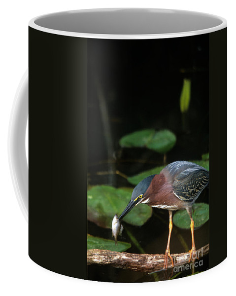 Heron Coffee Mug featuring the photograph A Green Heron With Fish by John Harmon