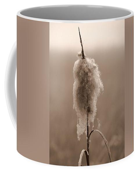 Lehtokukka Coffee Mug featuring the photograph Broadleaf Cattail 2 by Jouko Lehto