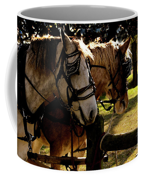 Horses Coffee Mug featuring the photograph Carriage Ride by Kim Henderson