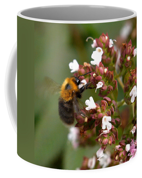 Lehtokukka Coffee Mug featuring the photograph Cuckoo Bumblebee by Jouko Lehto