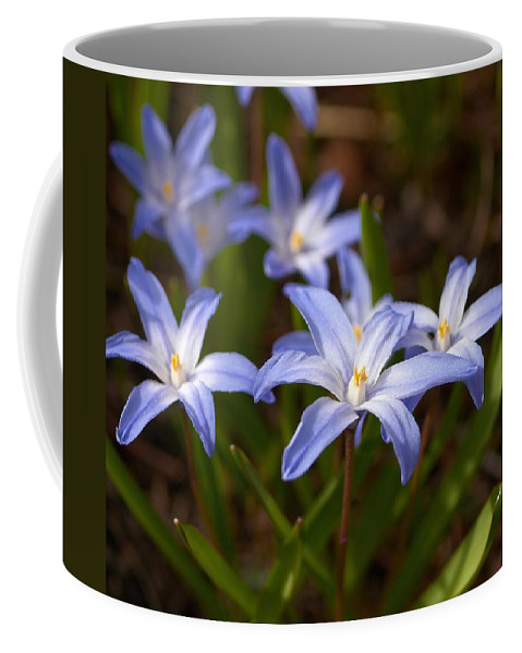 Lehtokukka Coffee Mug featuring the photograph Glory Of The Snow 1 by Jouko Lehto