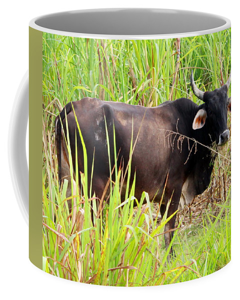 Jamaica Coffee Mug featuring the photograph Jamaican Bull by Debbie Levene
