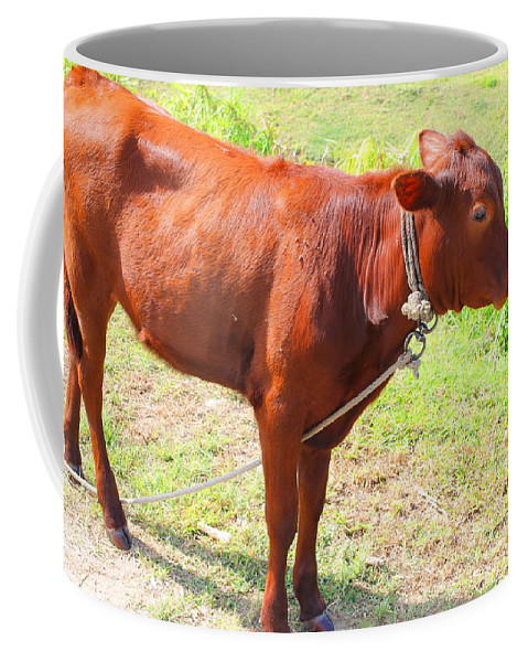Cow Coffee Mug featuring the photograph Jamaican Cow by Debbie Levene