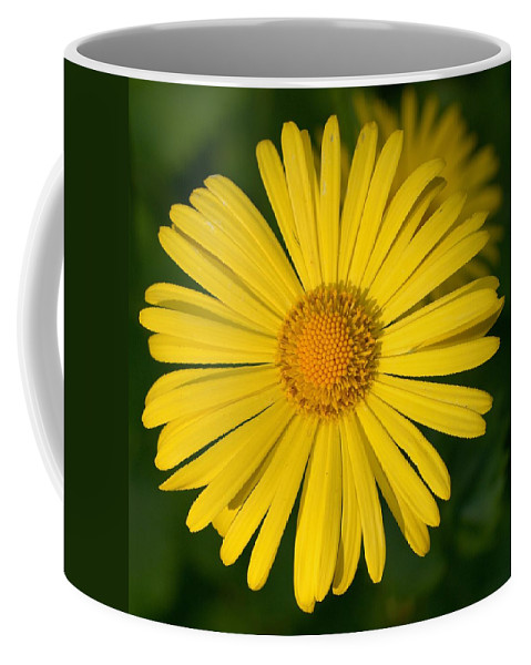 Doronicum Caucasicum Coffee Mug featuring the photograph Leopard's Bane by Jouko Lehto
