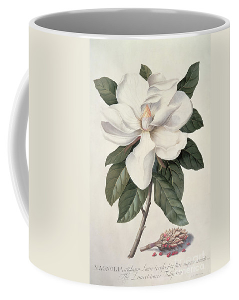 Plant; Flower Coffee Mug featuring the painting Magnolia by Georg Dionysius Ehret