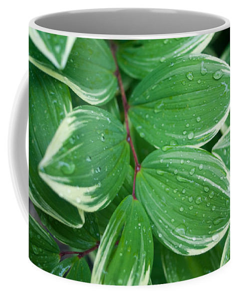 Solomon Coffee Mug featuring the photograph Tears Of Solomons by Douglas Barnett
