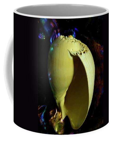Frank Wilson Coffee Mug featuring the photograph  Voluta Amphora Seashell by Frank Wilson