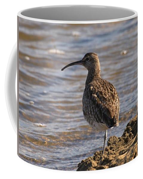 Lehtokukka Coffee Mug featuring the photograph Whimbrel by Jouko Lehto