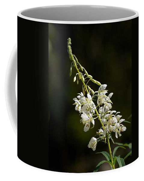 Lehtokukka Coffee Mug featuring the photograph White Fireweed by Jouko Lehto