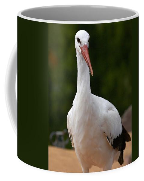 Lehtokukka Coffee Mug featuring the photograph White Stork 4 by Jouko Lehto