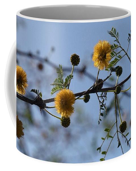 Lehtokukka Coffee Mug featuring the photograph Yellow Minosa by Jouko Lehto