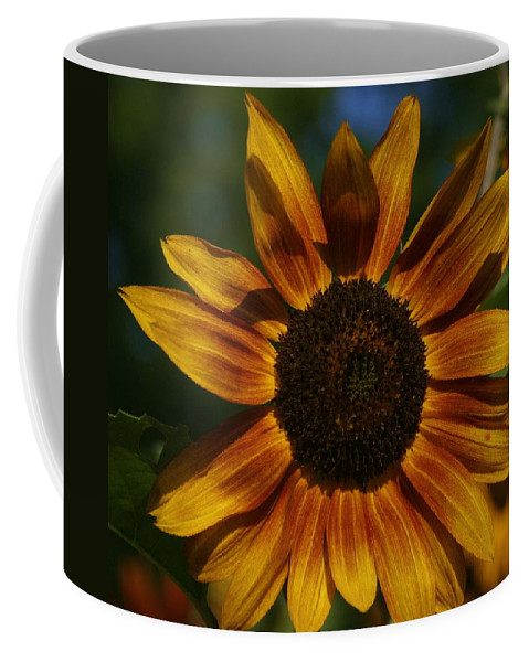 Sun Flower Coffee Mug featuring the photograph Yellow Sun Flower by Eric Noa
