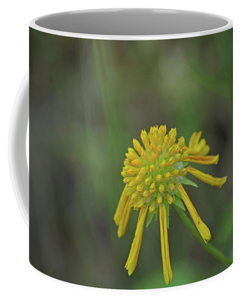 Flower Coffee Mug featuring the photograph 081117008 by Jean Edwards