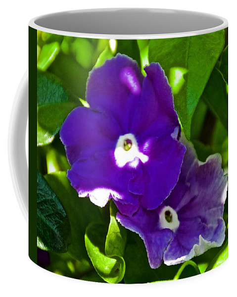 Purple Flowers At Pilgrim Place In Claremont Coffee Mug featuring the photograph Purple Flowers In Pilgrim Place In Claremont-california by Ruth Hager