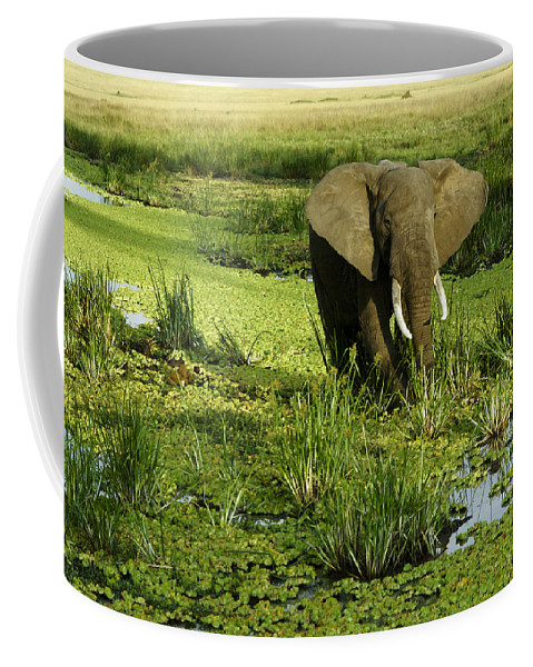 Africa Coffee Mug featuring the photograph African Elephant In Swamp by Michele Burgess