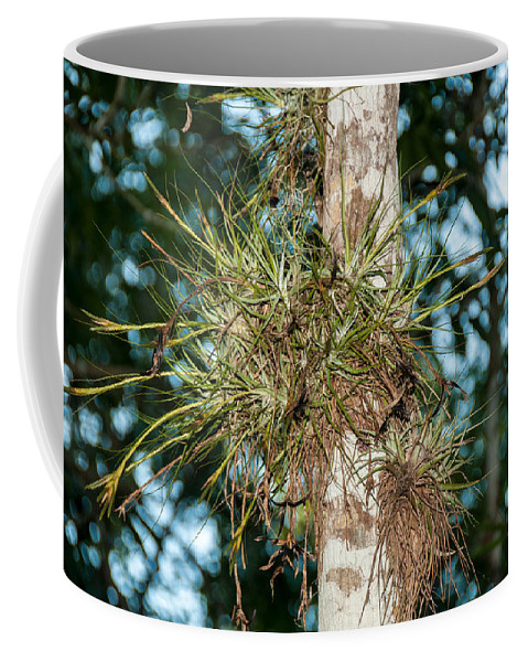 Mexico Quintana Roo Coffee Mug featuring the digital art Air Plants In Grupo Coba At The Coba Ruins by Carol Ailles
