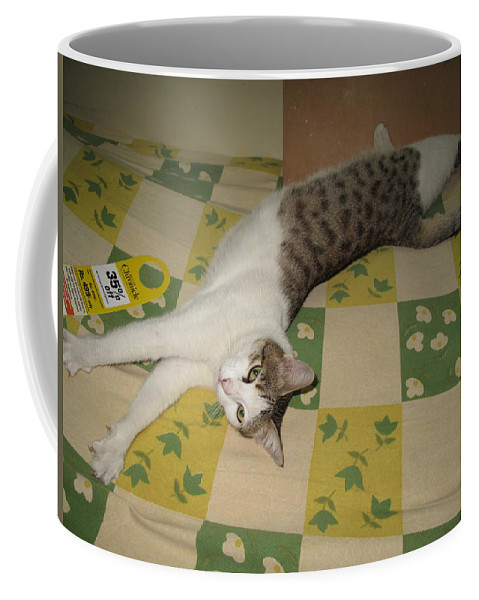 Relaxed Cat Coffee Mug featuring the photograph Ammani The Cat by Asha Sudhaker Shenoy