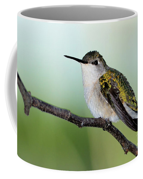 Ruby-throated Hummingbird Coffee Mug featuring the photograph At Rest by Betty LaRue