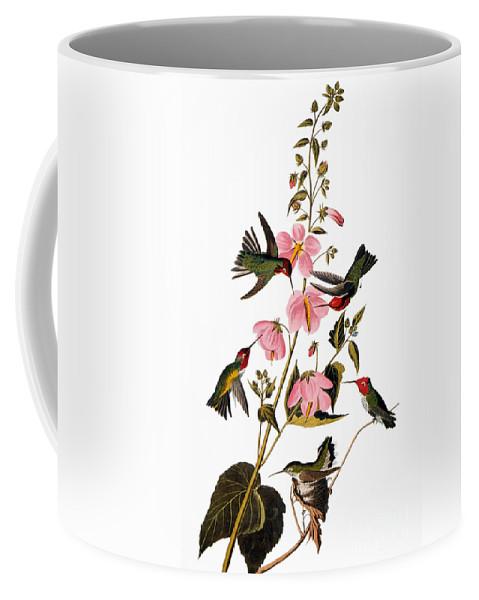 1838 Coffee Mug featuring the photograph Audubon: Hummingbird by Granger