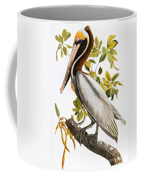 1838 Coffee Mug featuring the photograph Audubon: Pelican by Granger