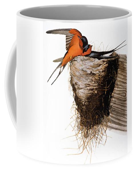 1838 Coffee Mug featuring the photograph Audubon: Swallow by Granger