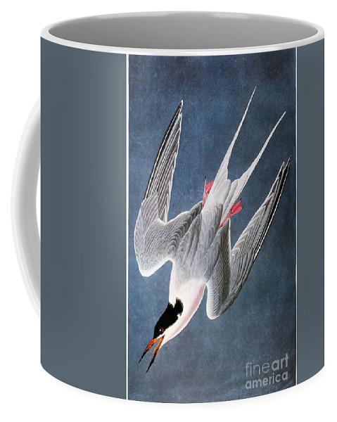 1838 Coffee Mug featuring the photograph Audubon: Tern by Granger