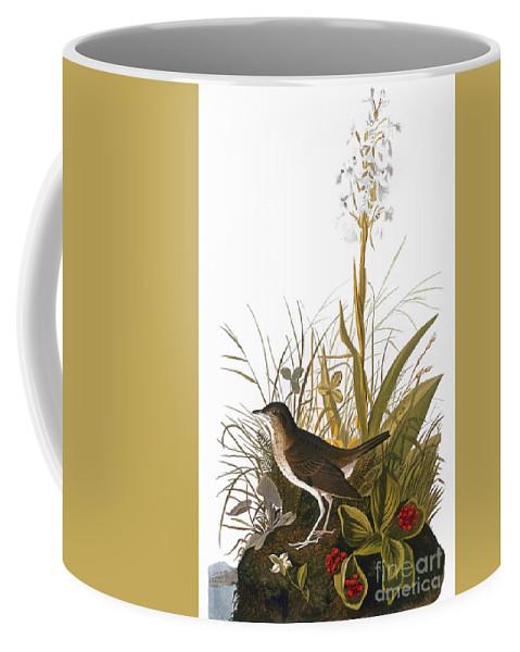 1838 Coffee Mug featuring the photograph Audubon: Thrush by Granger