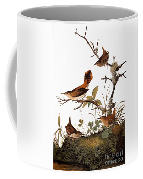1838 Coffee Mug featuring the photograph Audubon: Wren by Granger