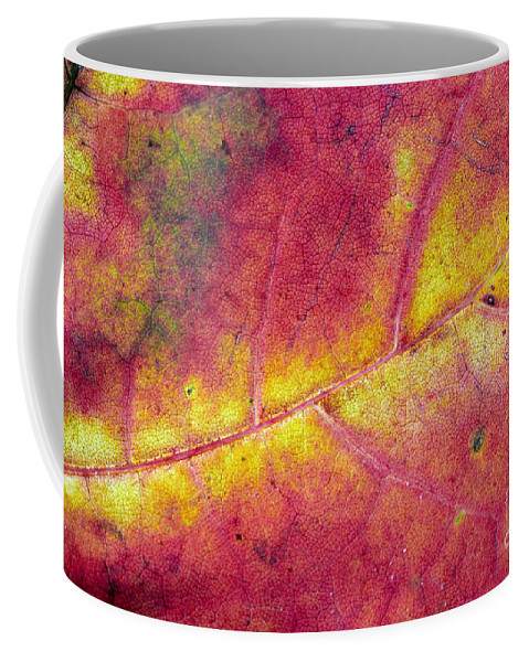 Leaf Coffee Mug featuring the photograph Autumn Leaf by Michal Boubin