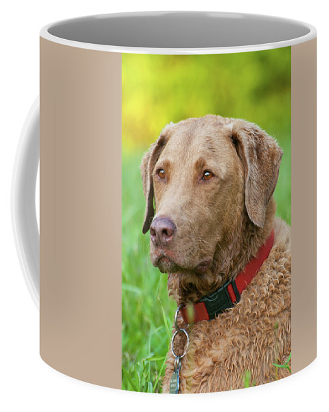 Dog Coffee Mug featuring the photograph Bailee 1149 by Guy Whiteley
