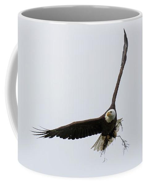 Eagle Coffee Mug featuring the photograph Bald Eagle Works On Its Home by Tony Hake