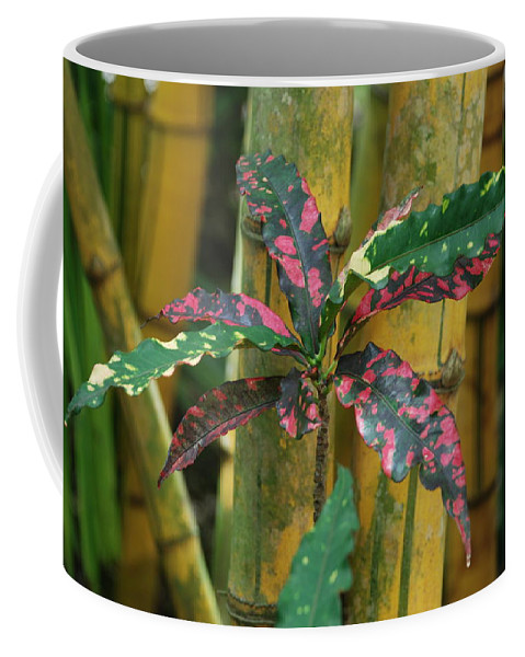 Macro Coffee Mug featuring the photograph Bamboo Flower by Rob Hans