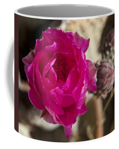 Flowers Coffee Mug featuring the photograph Beavertail Cactus Blossom 2 by Kelley King